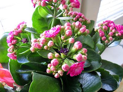 11:15 - vattnar blommor