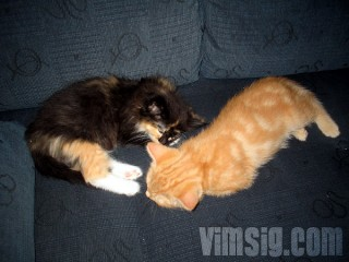 sover sött tillsammans