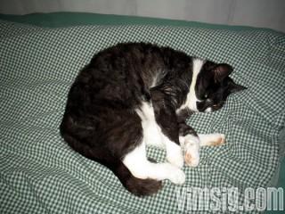 obligatorisk kattbild på doris