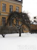 annat träd