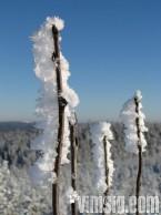 snö på kvistarna