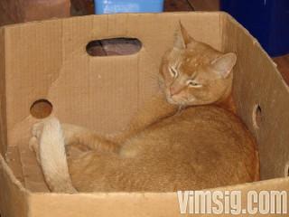 blondin-A's katt gillar kartonger
