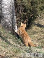 nalle kikar bakom trädet
