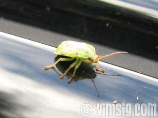 en liten grön figur