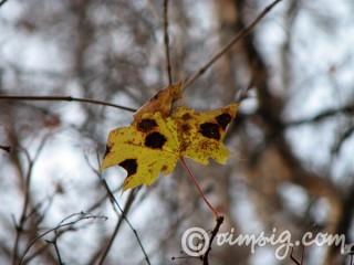 ett löv