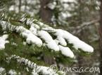 snö på grangren