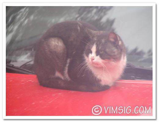 ser katt genom bussfönstret