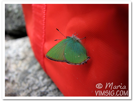 grön fjäril mot röd väska