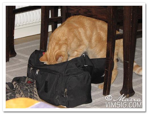 nalle inspekterar min handväska