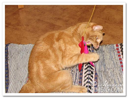 vilda katten tuktar fjädern