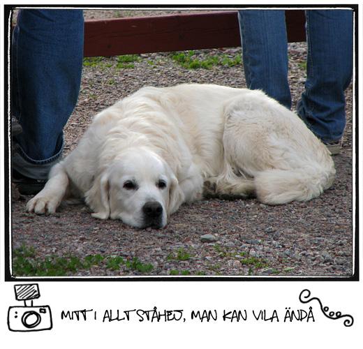 hund i vila