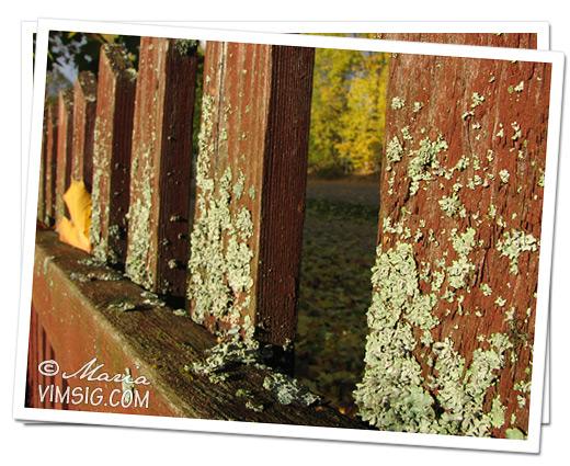 staket i macro