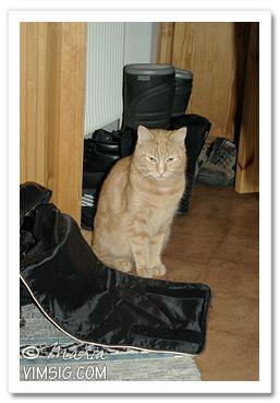 Nalle har undersökt min väska
