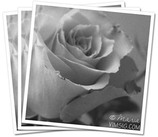 grånad ros