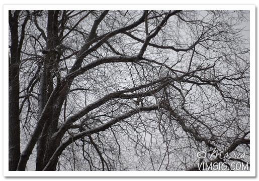 gråa snöiga grenar
