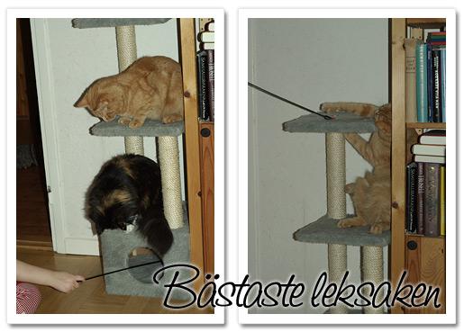 lekfulla kissekatter