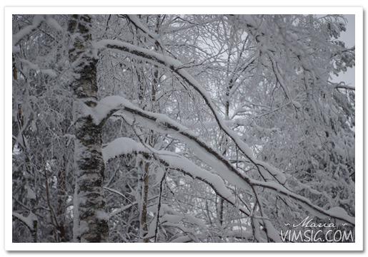 snö på alla grenarna
