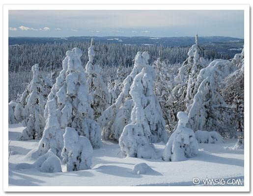 massor med snö