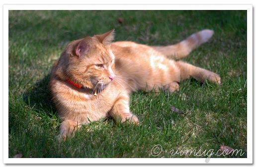 nallen njuter i gräset