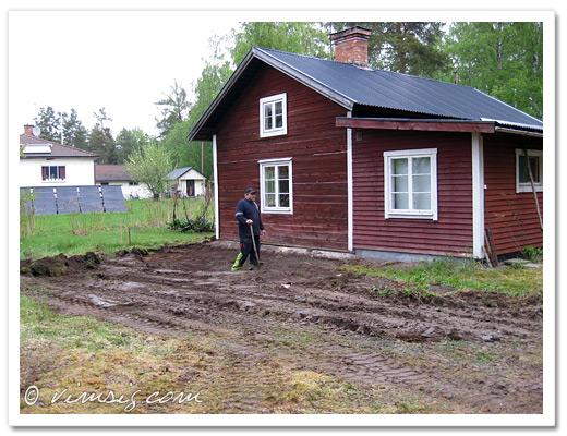 en gräsmatta full i jord och lera, ett antal buskar mindre och Mattias med spaden