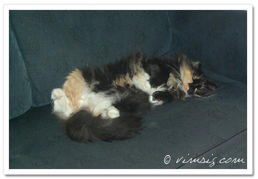 kajsa sover på rygg