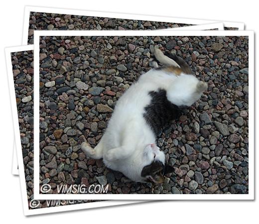 sötaste kissekatten ligger och rullar