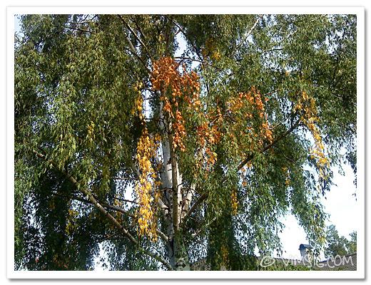 det börjar komma höstiga löv nu