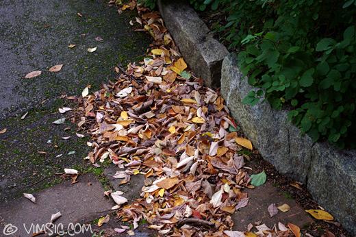 höstiga löv