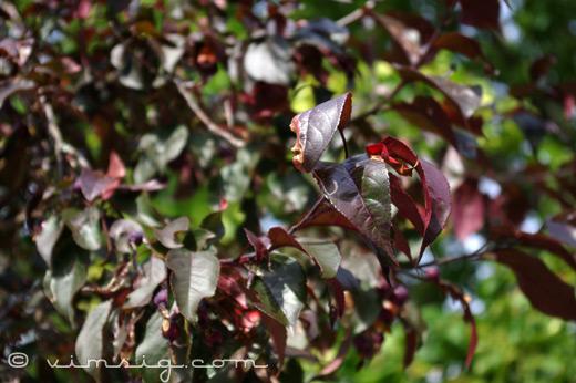 träd med lite färg