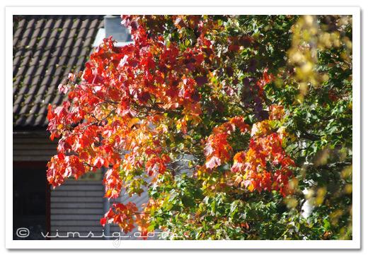 mer höstiga löv