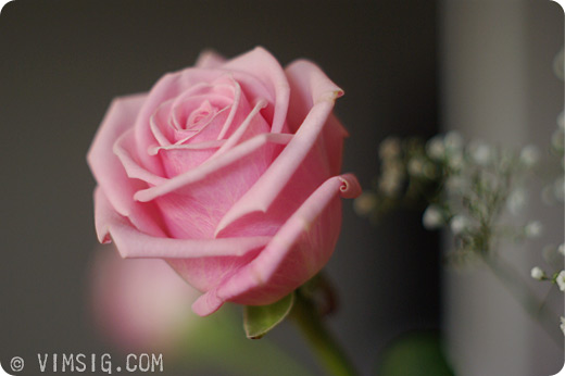 dotterns blommor