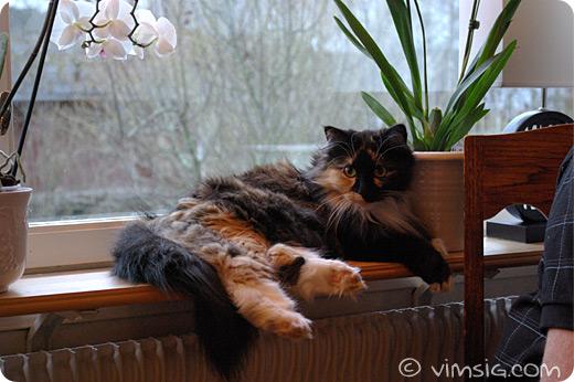 vackra Kajsa i fönstret