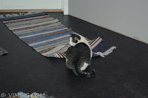 kisse och mattan