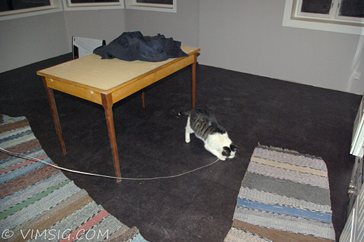 kisse leker med en mattremsa