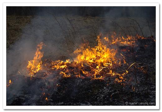 bränner gräs