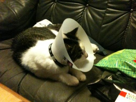 söta enerverande tratt-katten