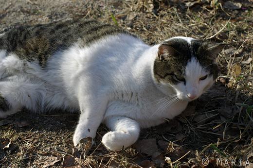 sötaste kissekatten