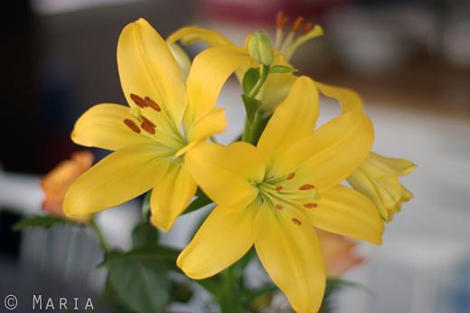 tjusiga blommor