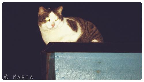katt på svalt papptak