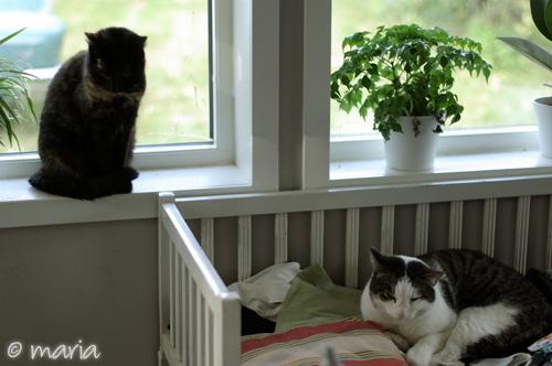 två katter i en bild