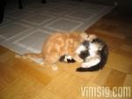 busiga kattungar (12v)
