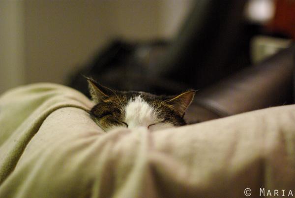 mycket slapp katt
