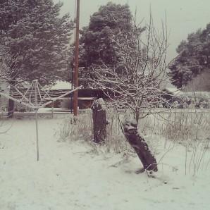 snö på morgonen